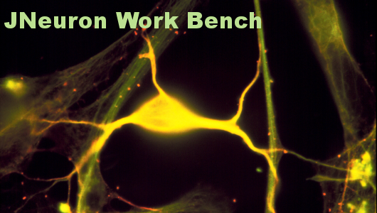 JNeuron Splash Screen